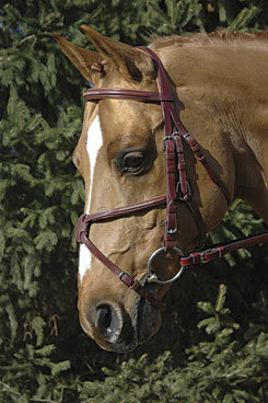 Vespucci Fancy Raised Figure 8 Jumper Bridle