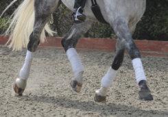 Equilibrium Tri Zone Stretch and Flex Bandages Best Price