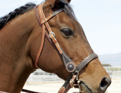 Weaver Maverick Browband Headstall