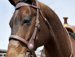 Weaver Pretty in Pink Browband Headstall