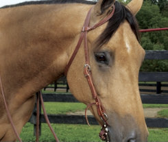 Weaver ProTack Oiled Rolled Headstall