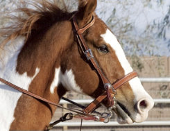 Weaver Trailblazer Sliding Ear Headstall