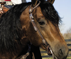 Weaver Westfall Showtime Flat Sliding Ear Headstall