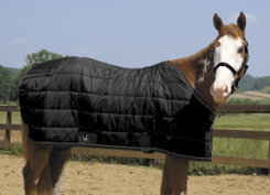 Weaver Heavyweight Winter Horse Stable Blanket (400 grams) Best Price
