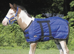 Weaver Foal Midweight Stable Blanket Best Price