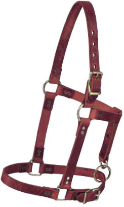 Weaver Riveted Foal Halter Best Price