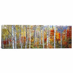 Icanvas Fall Trees; Shinhodaka; Gifu; Japan Canvas Art