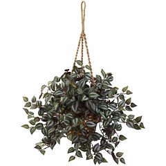 Wandering Jew Hanging Basket
