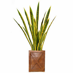 44 Inch Tall Snake Plant In Rustic Planter