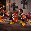 Decorative Acorns, Set of 10