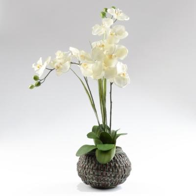 Orchid Woven Basket Floral Arrangement