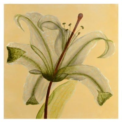See Through Lily Canvas Art Print