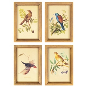 Birds Framed Art Print, Set of 4