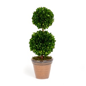 Boxwood Double Ball Preserved Topiary, 17 in.