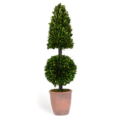 Boxwood Pyramid Ball Preserved Topiary, 28 in.