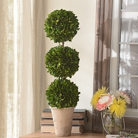 Boxwood Triple Ball Preserved Topiary, 24 in.