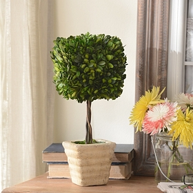 Boxwood Square Preserved Topiary, 16 in.