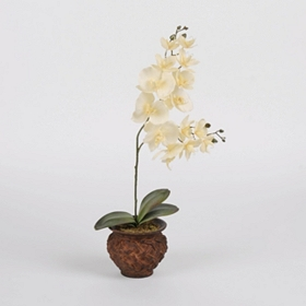 White Orchid Floral Arrangement in Bronze Pot
