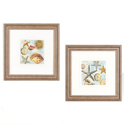 Beach Shells Framed Art Print