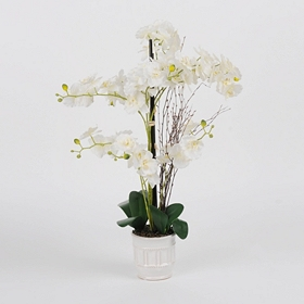 White Orchid Floral Arrangement in Ceramic Pot