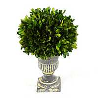 Preserved Boxwood Topiary, 12 in.