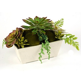 Succulent Floral Arrangement, 14 in.
