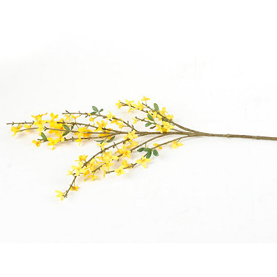 Yellow Forsythia Stem