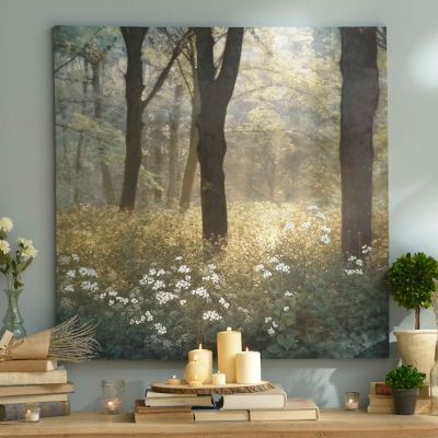 Mornings in the Forest Canvas Art Print