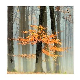Foggy Autumn Trees Canvas Art Print
