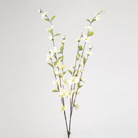 White Dogwood Stem