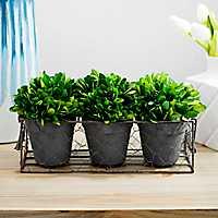 4- pc. Boxwood Topiary Arrangement