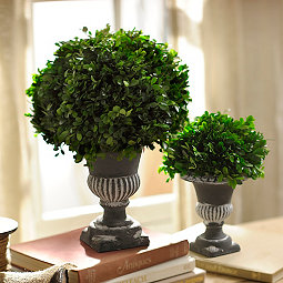 Preserved Boxwood Topiary, 17 in.