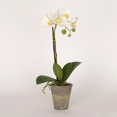 White Orchid Floral Arrangement