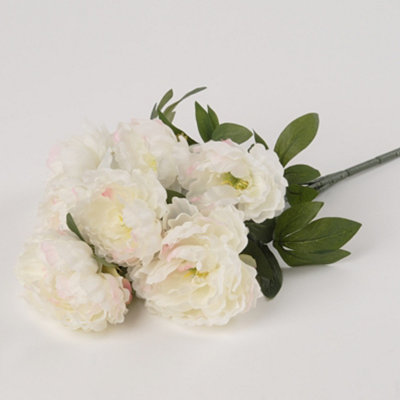 Cream Peony Bush, 20 in.