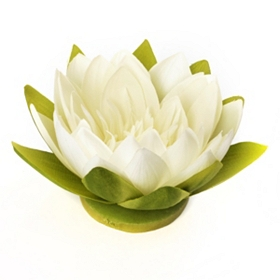 Cream Floating Lotus Blossom