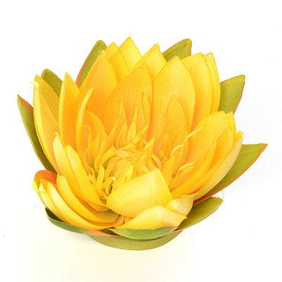 Yellow Floating Lotus Blossom