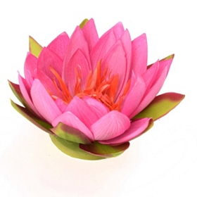 Pink Floating Lotus Blossom