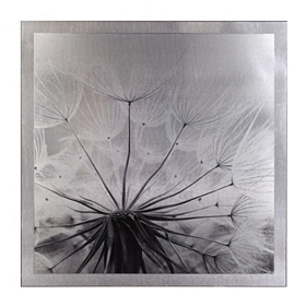 Dandelion Mounted Aluminum Art Print