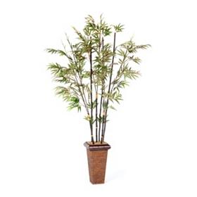 Bamboo Tree, 7 ft.
