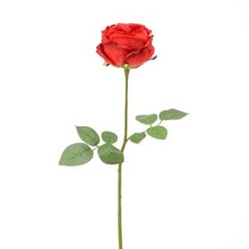 Red Cabbage Rose Stem