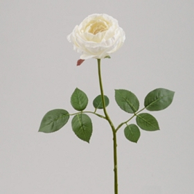 White Cabbage Rose Stem