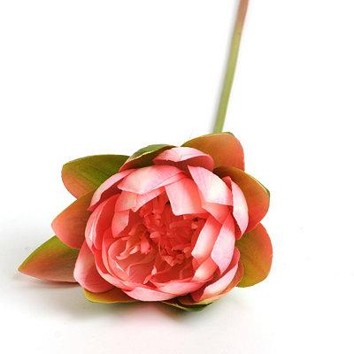 Pink Lotus Stem