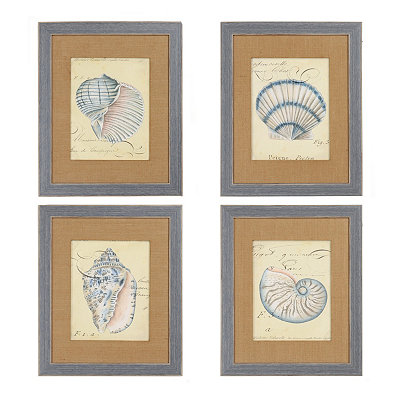 Seashell Ephemera Framed Art Prints