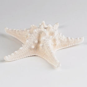 Armoured White Starfish