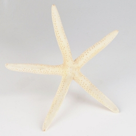 White Finger Starfish