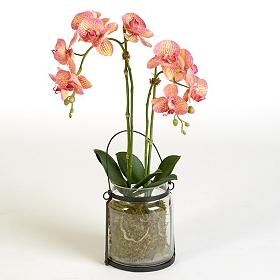 Pink Orchid Lantern Arrangement