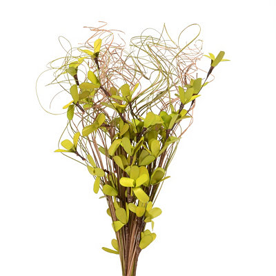 Green Palm Lily Bouquet