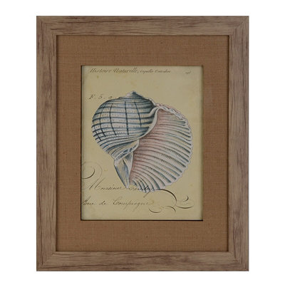 Seashell Ephemera IV Framed Art Print