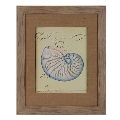 Seashell Ephemera II Framed Art Print