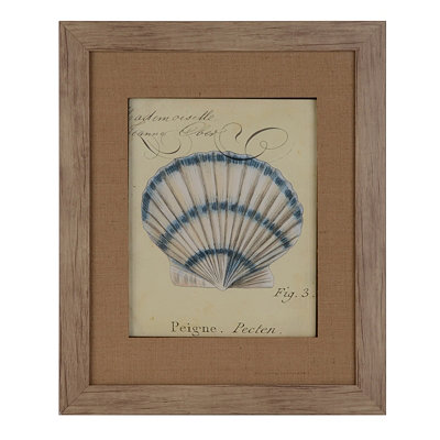 Seashell Ephemera III Framed Art Print